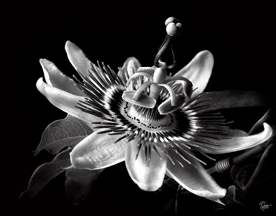 Flower Symbolism Widowcranky